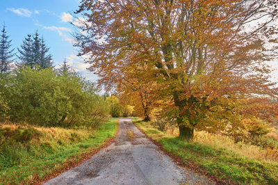 Autumn colours Dumfries and Galloway Lane