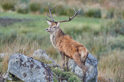 Red Deer Range Dumfries and Galloway
