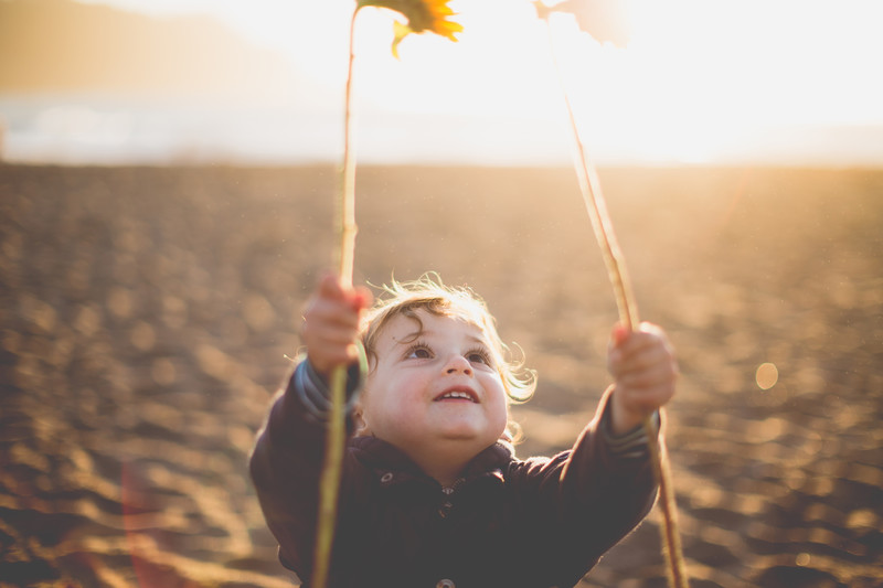 toddler plays with sunflowers