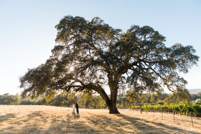 Cielo Estate Winery Wedding Photographers