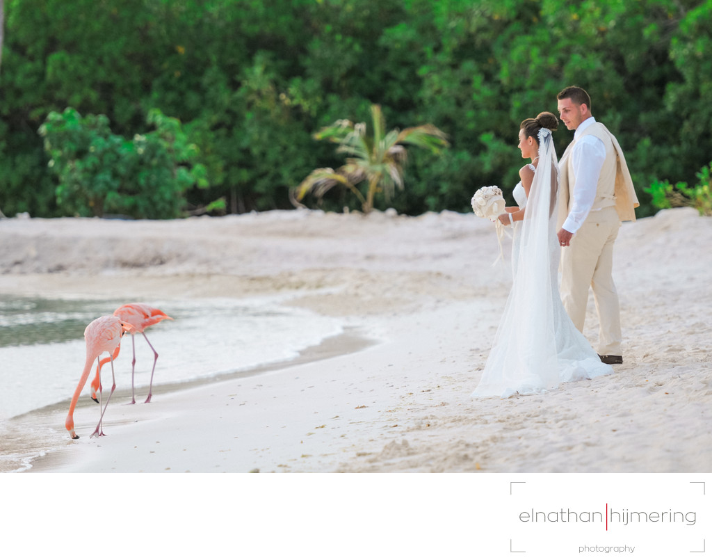 Bride Groom Flamingo Beach