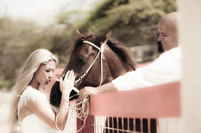bride and groom horse