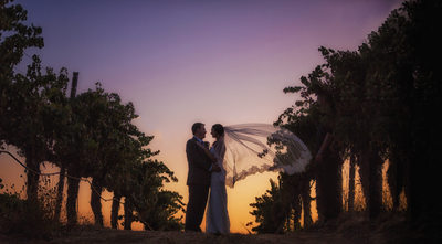 bride and groom vineyard sunset