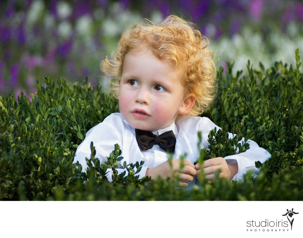 Little boy with bowtie sitting in a hedge at a wedding in the garden at Montreal's Chateau Ramezay