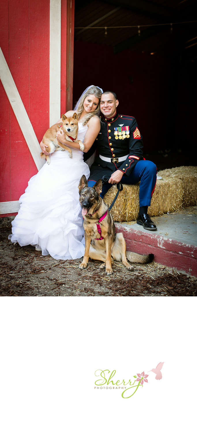 military wedding bride groom dogs barn