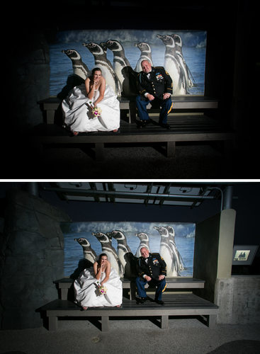 retouch bride and groom penguin