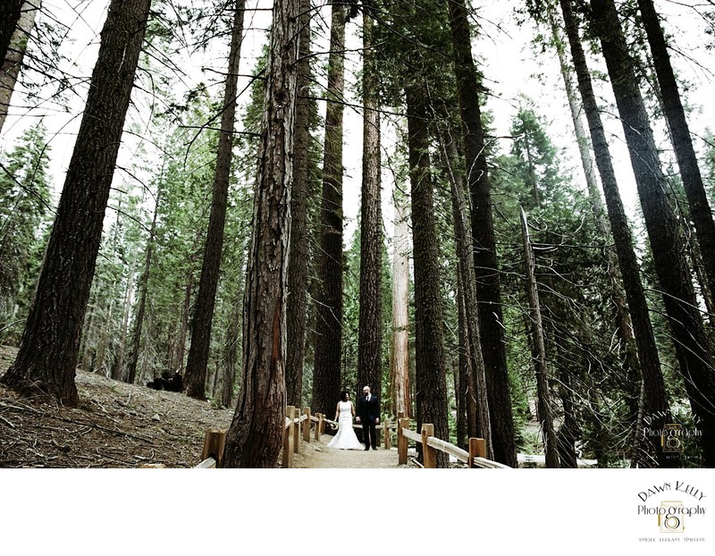 Bride and groom walking through Mariposa Grove