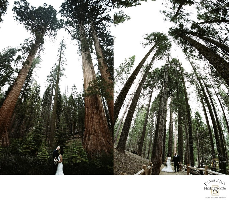 Bride and groom in Mariposa Grove