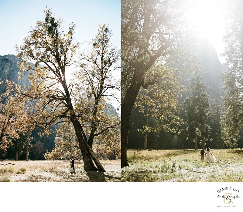 Yosemite elopement El Capitan Meadow in fall