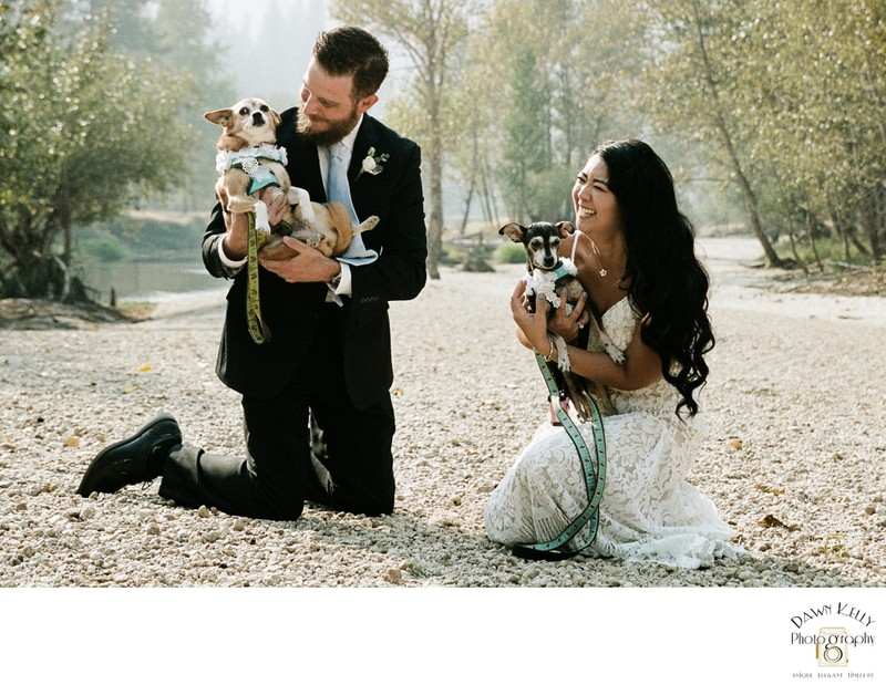 Bride and groom with dogs in Yosemite