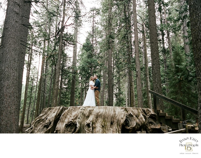 Bride and groom at Calaveras Big Trees