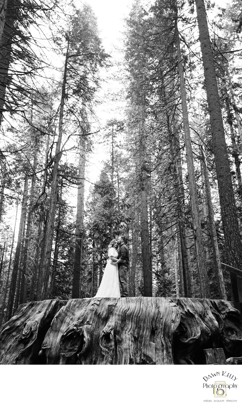 Calaveras Big Trees California Engagement Photo
