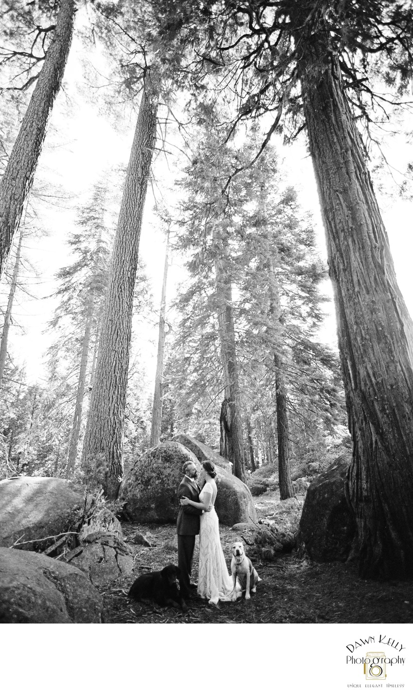 Pinecrest elopement with dogs