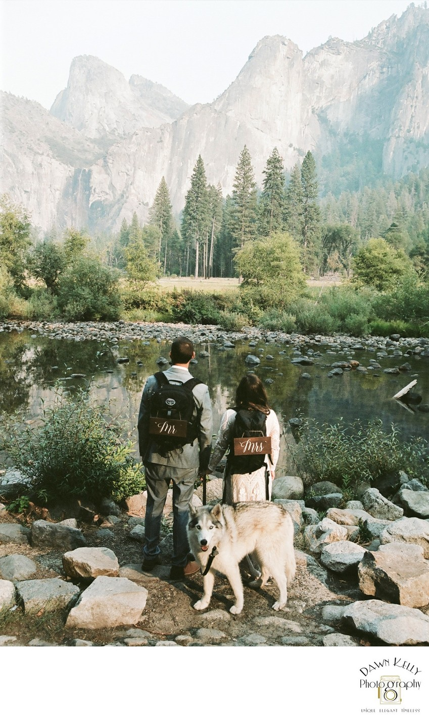 Dog in Yosemite Wedding