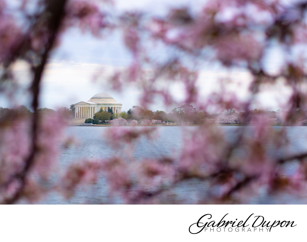 Blossomed Jefferson Memorial