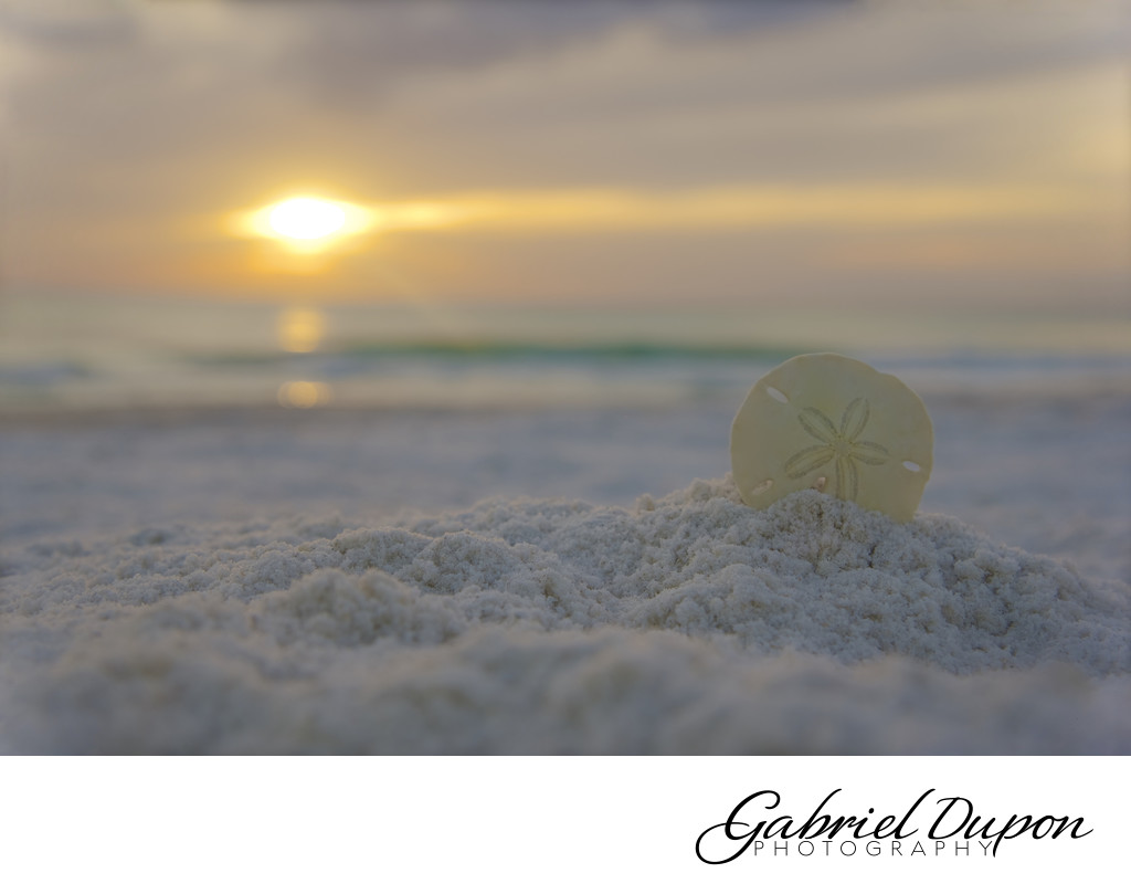 Sand Dollar Sunset
