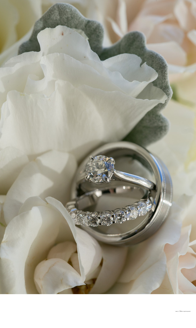 Wedding rings, rose petals, dusty miller