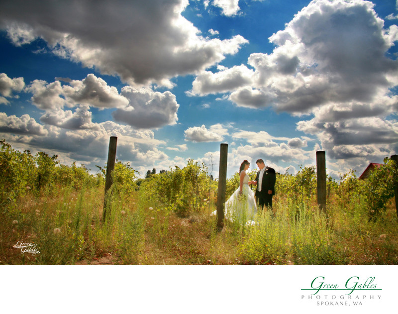 Bride & groom walking in the vineyard
