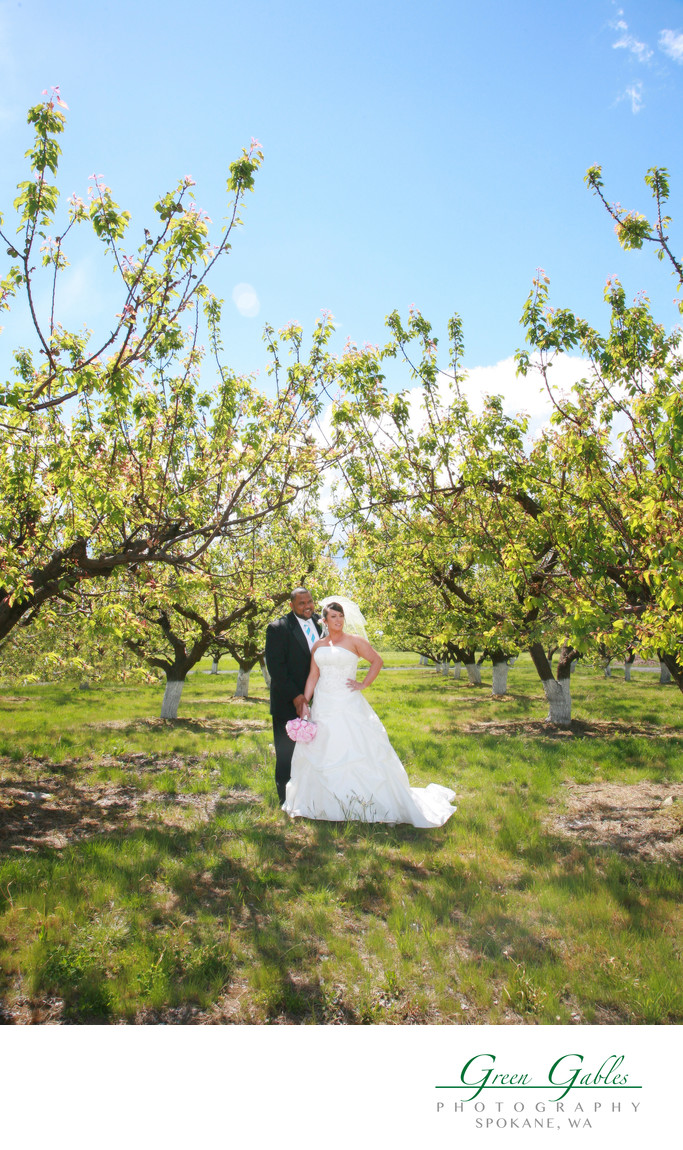 bride & groom in Apple orchard
