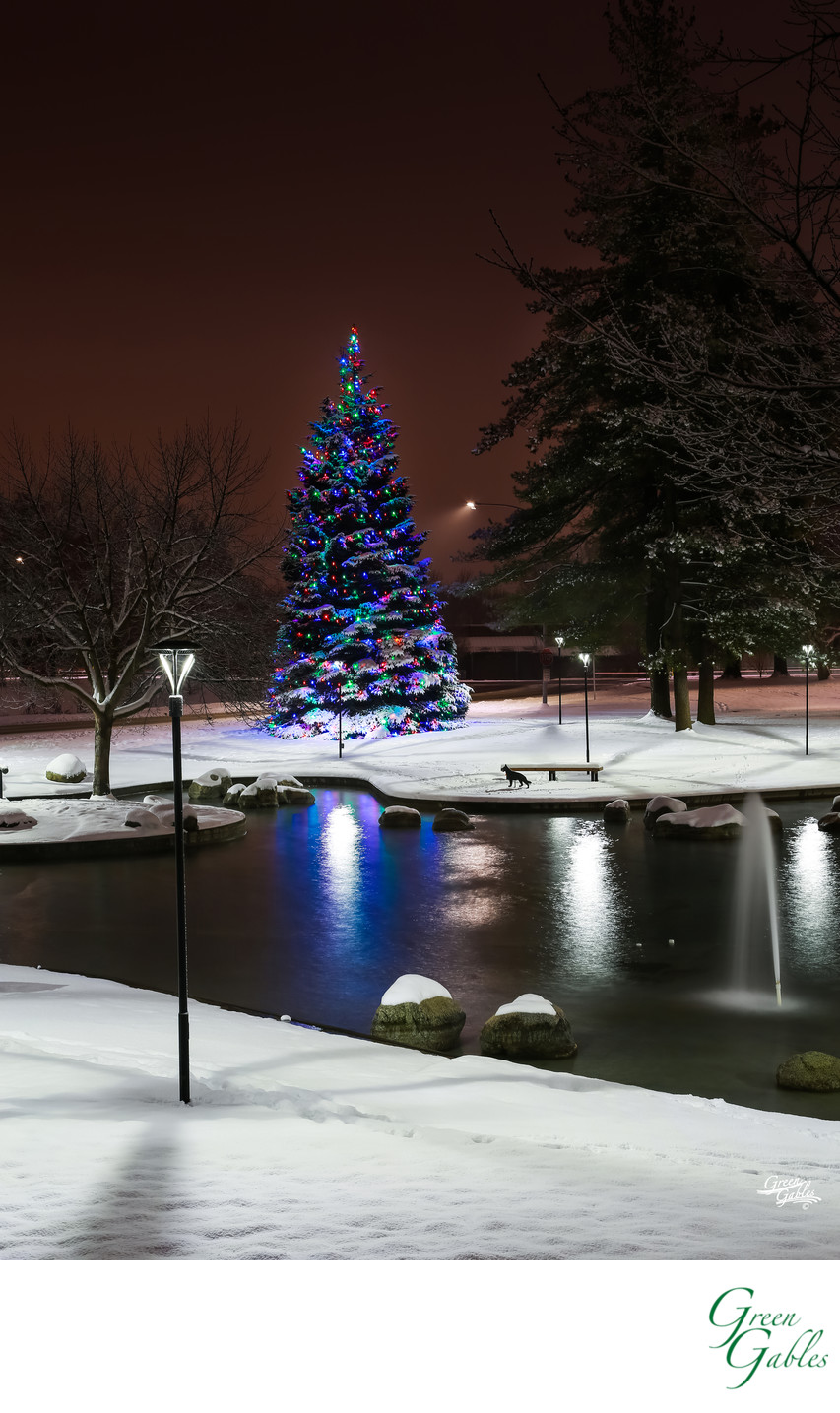 Senske Lighting of 100 foot tree, Spokane, WA