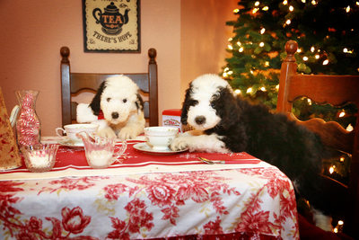 Puppies having a tea party