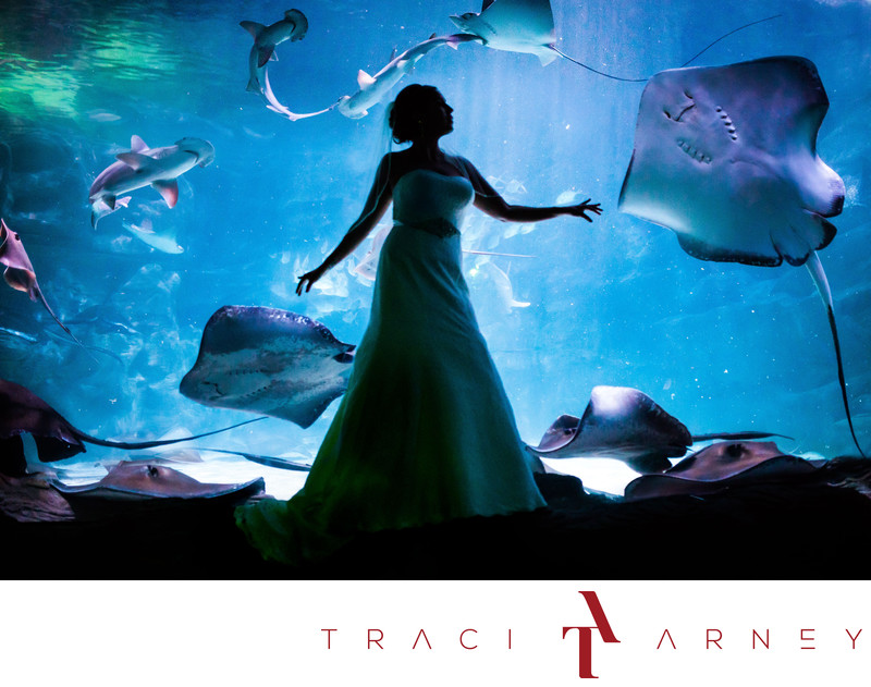 Bridal Session at Ripley's Aquarium, Myrtle Beach, SC