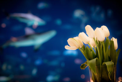 Greensboro Science Center Aquarium Wedding Photographer