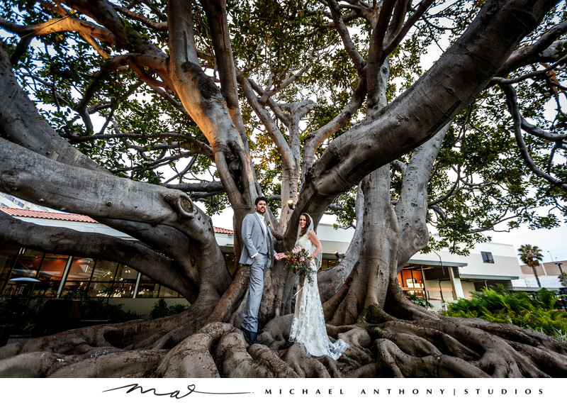 fairmont miramar hotel santa monica wedding tree