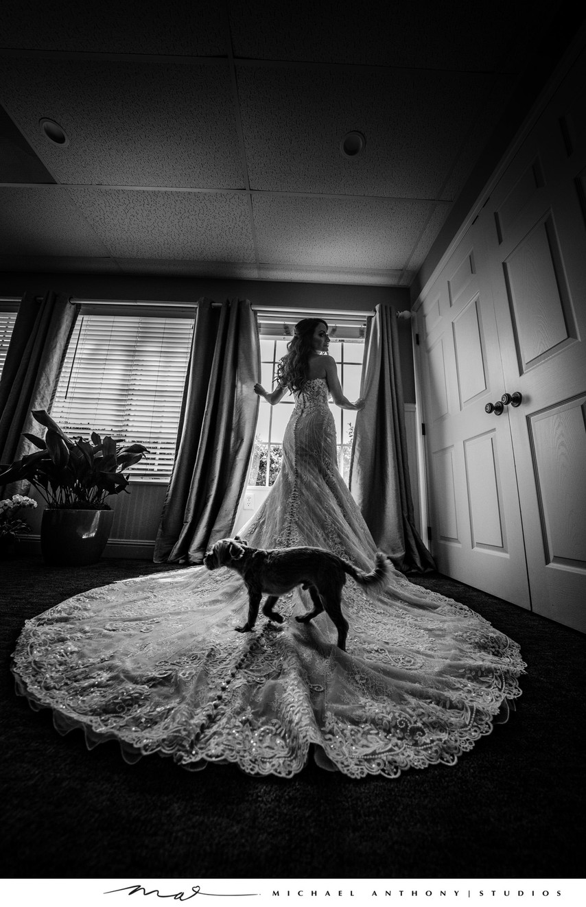 Getting Ready: Dog Walks Across Bride's Gown