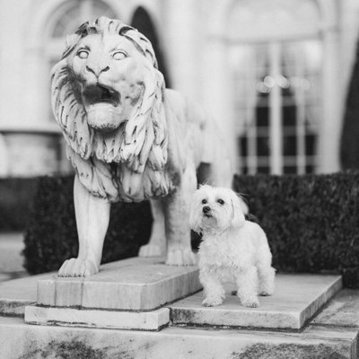 Dog stands by Statue at Wedding