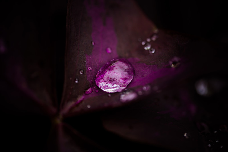 Dewdrop on purple