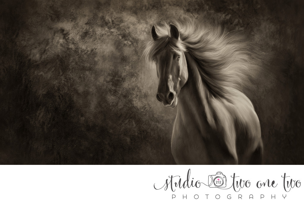 South Carolina Equine Photographer