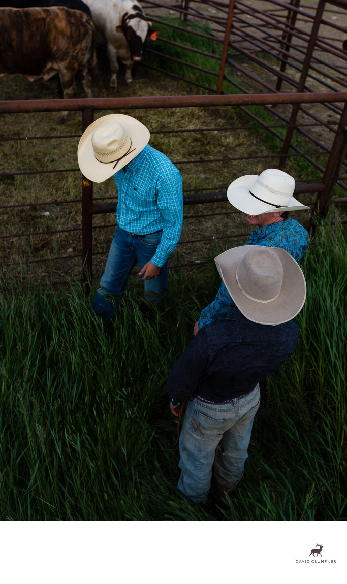 Three Montana Cowboys