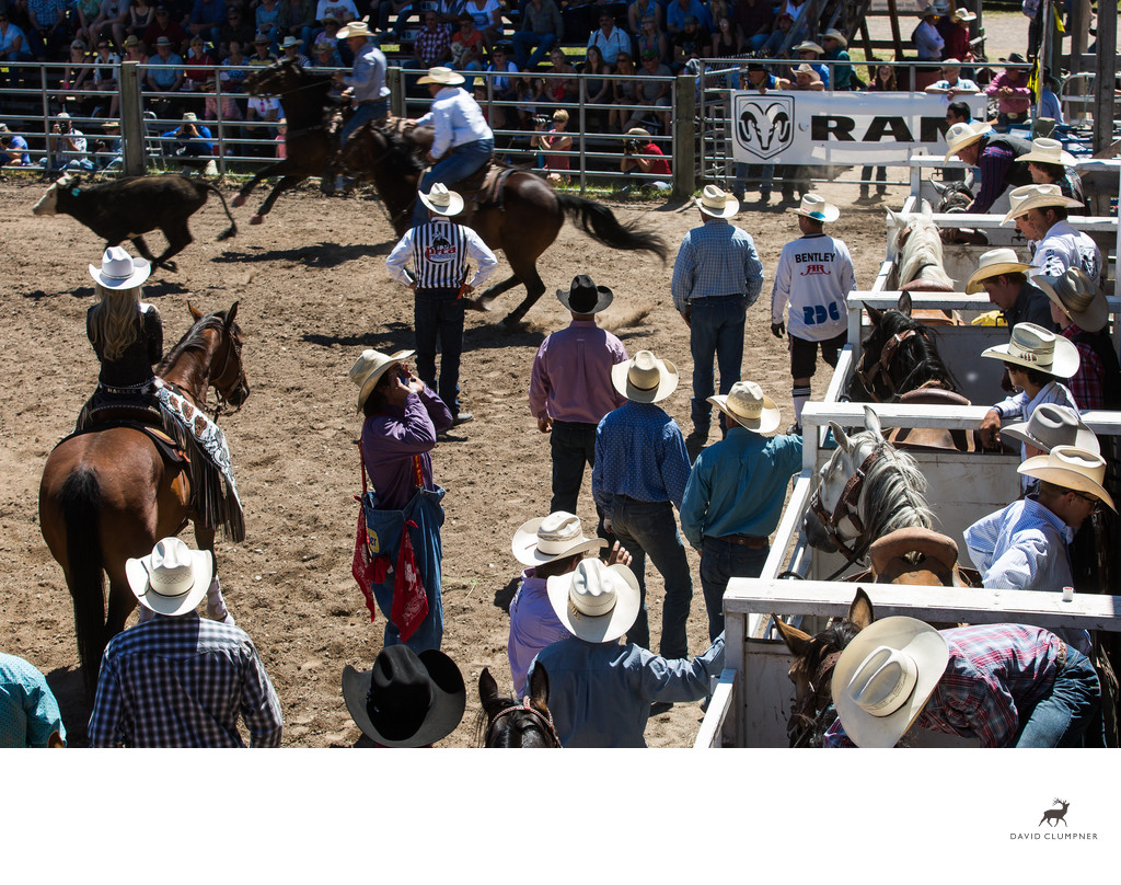 Steer Wrestling at the Augusta, Montana Rodeo