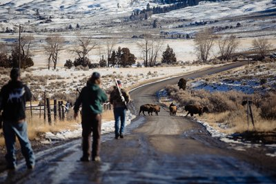 Hunters Close in on Bison