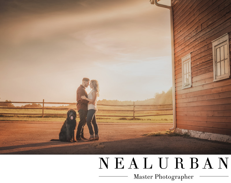 wny engagement photography knox farm dog park sunset