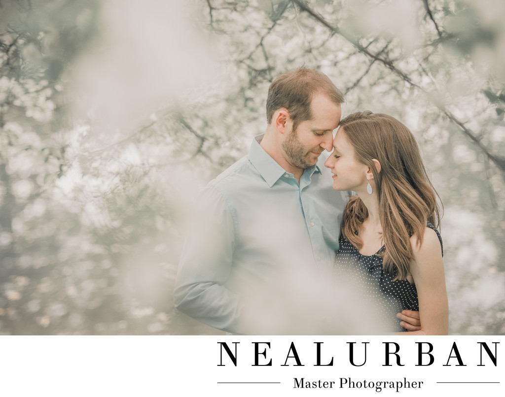 buffalo spring engagement session cherry blossom trees