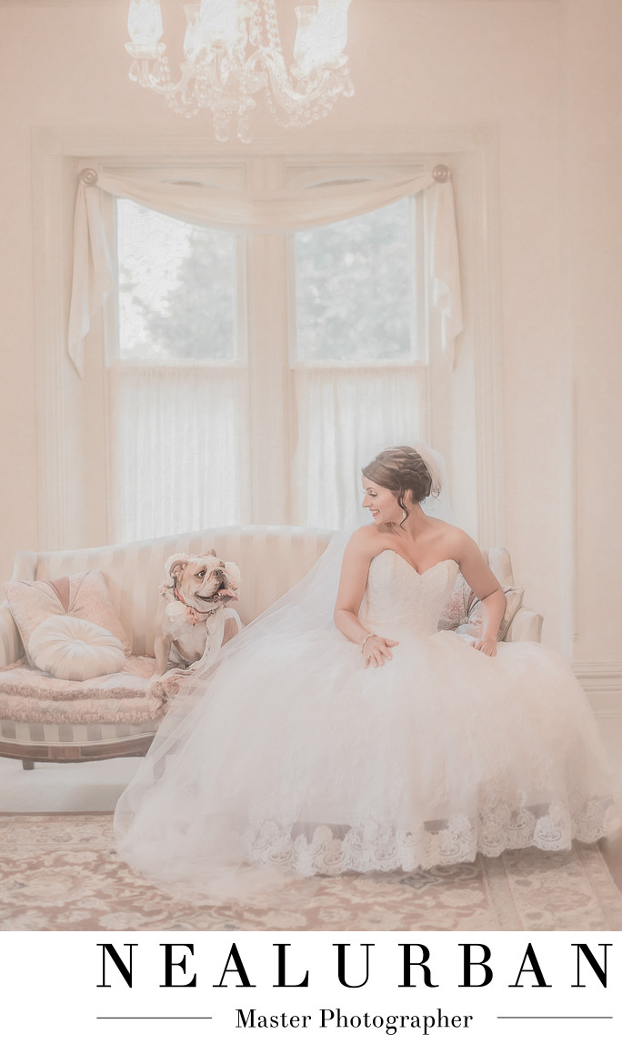 Washington dc wedding photographers bride with bulldog