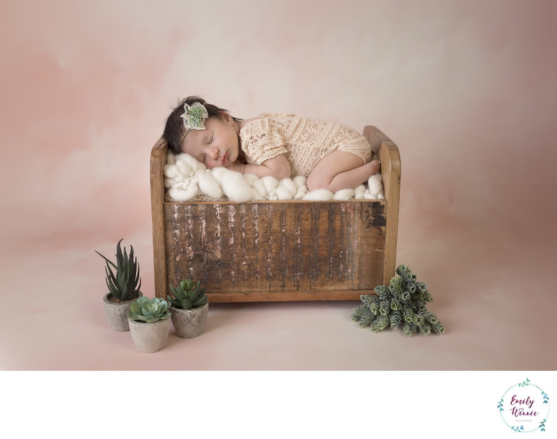 Emily Winnie Photography-Baby with succlents