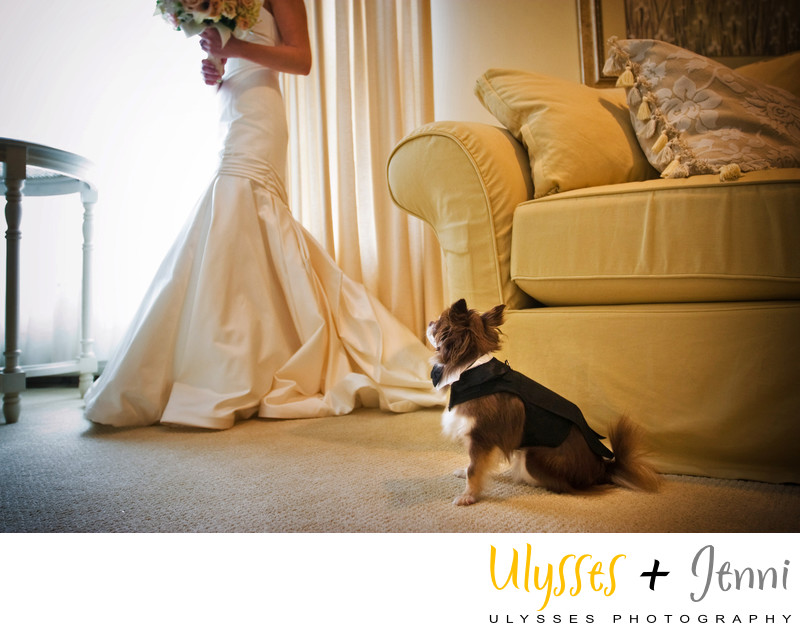 Wedding Photos That Include Dogs