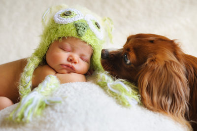Best Newborn Photos with Dogs in the Hudson Valley