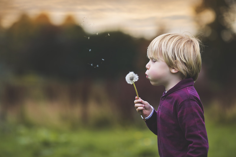 blowing dandelion portrait photography