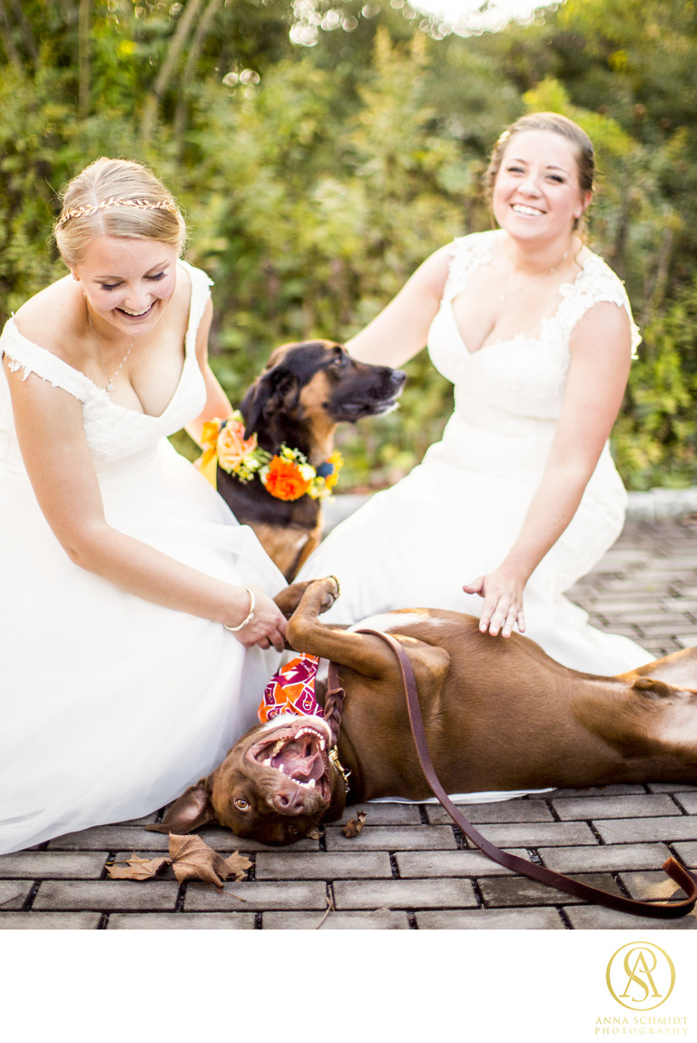 Howard County Conservancy Dogs Wedding Photographer