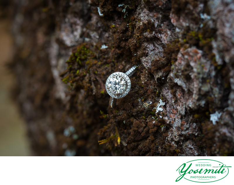 Bride's Engagement Ring in bark at Majestic Yosemite Hotel