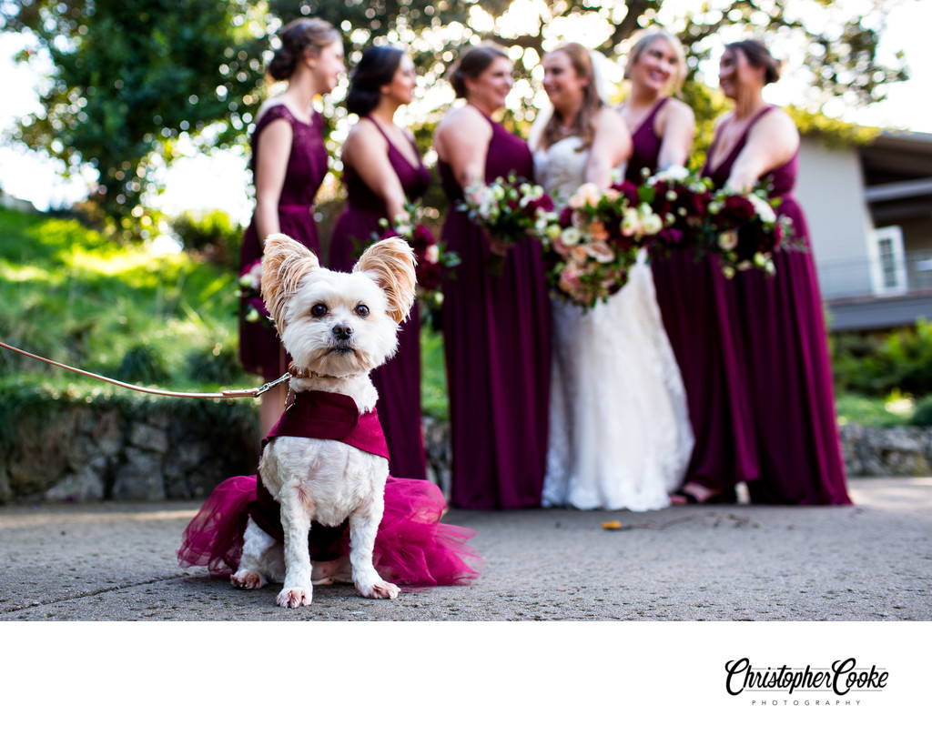 dogs in wedding pictures wedgewood wedding
