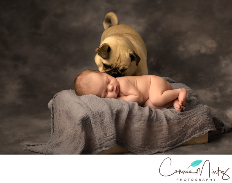 Portland OR newborn photographer | Newborn and Dog