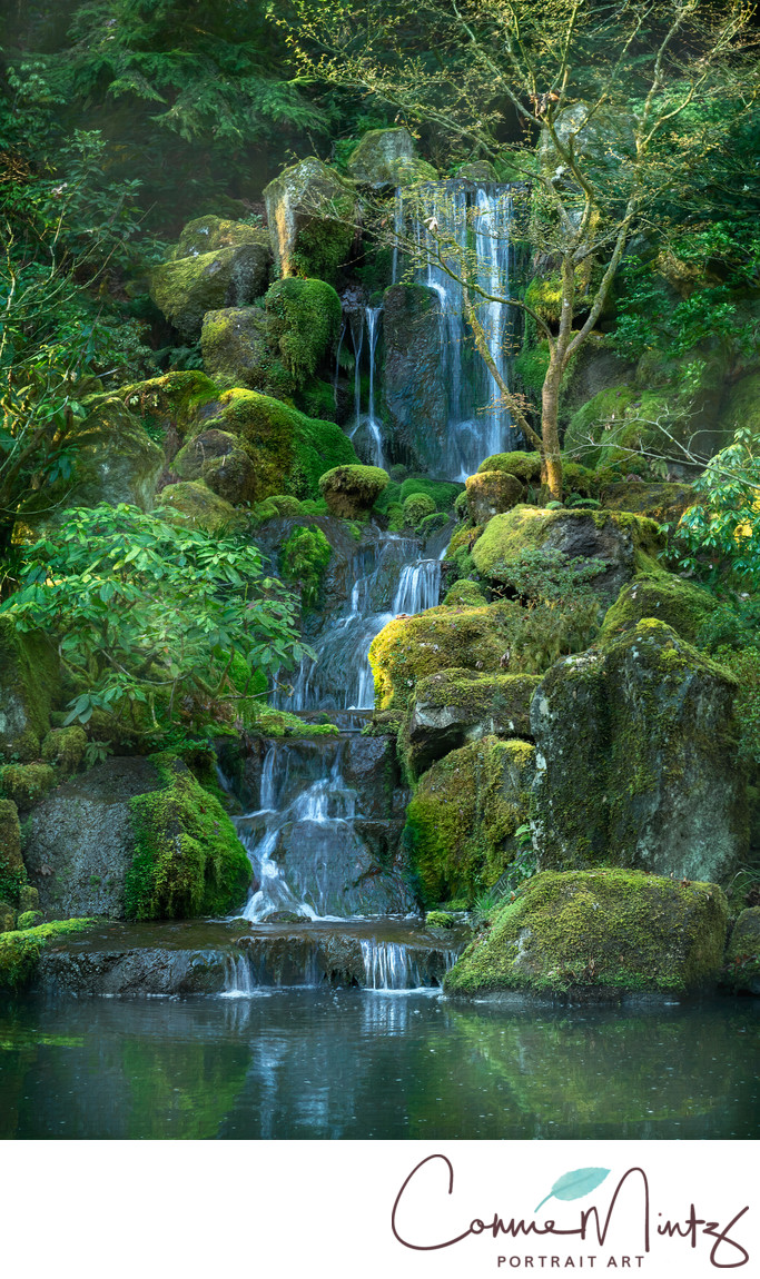 Japanese Garden Waterfall in Spring