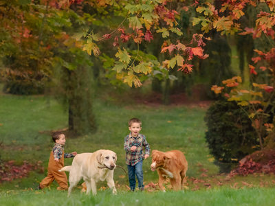 Boys and dogs in fall