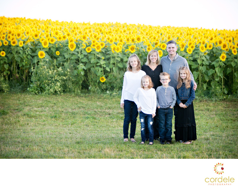 newbury sunflower patch family photos