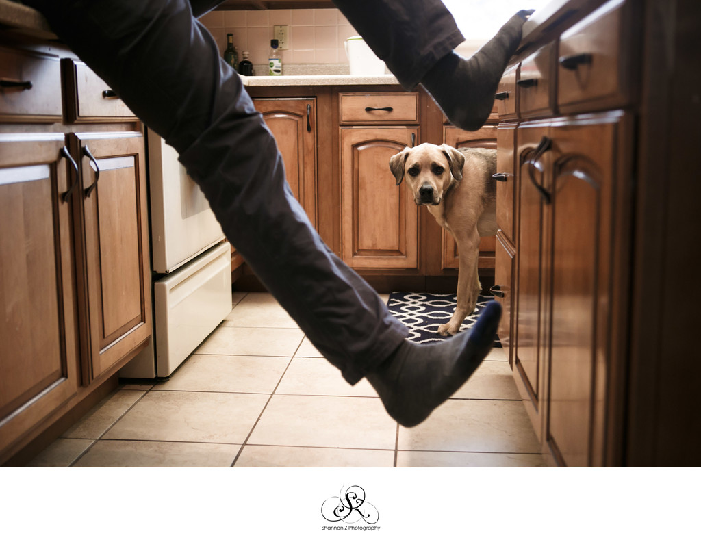 Dogs at Home: Lifestyle Photos